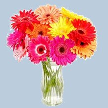 Most Popular Flowers flower power: what each of the 20 most popular flowers symbolize